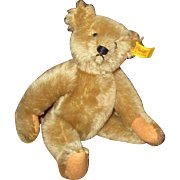 Adorable Steiff teddy