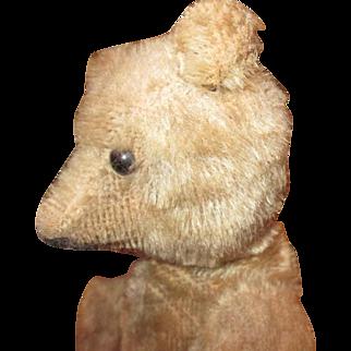 Adorable Antique mohair teddy