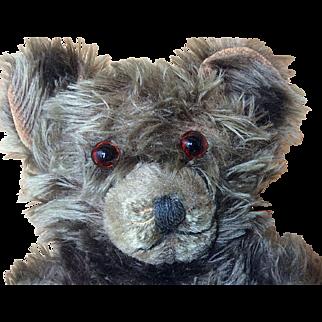 "Large Antique Mohair  Dark Brown Teddy Bear 20"""