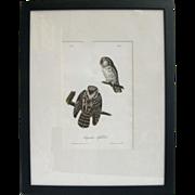 Rare Hand Colored Stone Lithograph Audubon Owl Print