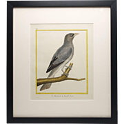 Antique French, Hand-painted Bird Engraving by Martinet