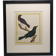 Antique French, Hand-Painted Bird Engravings by Martinet