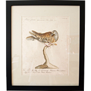 18th Century Hand-Painted Print of Wild Turtle Dove by Manetti