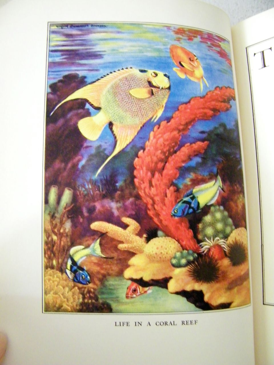 The Sea For Sam 1935 1st Edition