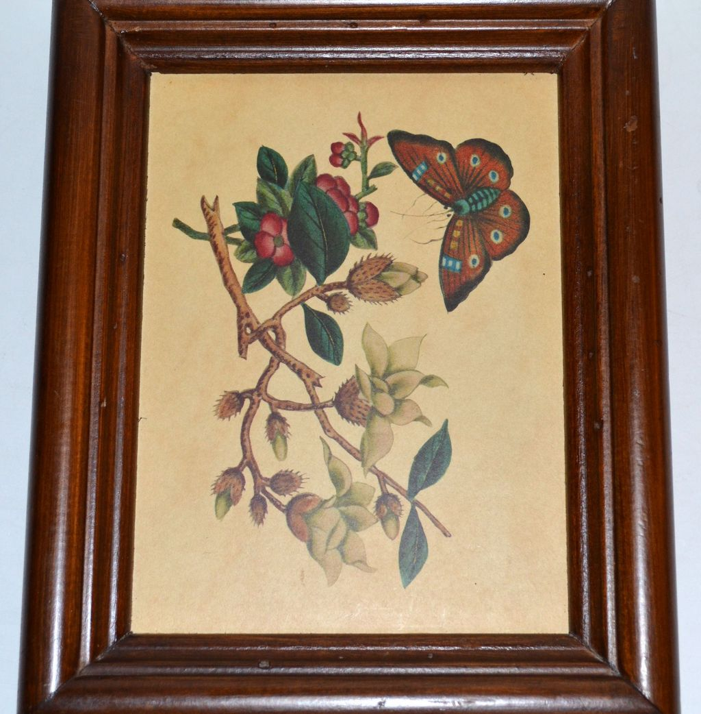 1960/70s Ma Leck ~ Framed Butterfly Print w/Tag