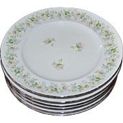 Haviland Bavaria FOREVER SPRING Daisy Set of 6 White Porcelain Plates
