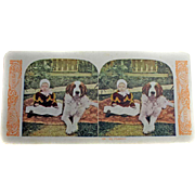 Stereo Card ''WORLD SERIES' 1905 Kawin And Co. Child And Dog Colorized
