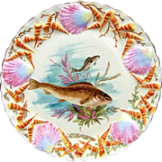 """Outstanding Vintage Pre-1900 Limoges France Hand Painted """"Fish & Sea Life"""" 9-1/8"""" Plate With Incredible Blown Out Fan & Funnel Shells"""