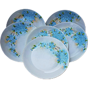 "Beautiful Hutschenreuther Selb Bavaria Vintage 1900's Hand Painted ""Forget Me Not"" Set of 6 Floral 9"" Plates"