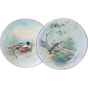 "Beautiful Royal Doulton 1902 Hand Painted ""Stock Dove"" and ""Shoveller"" 9-1/2"" Pair of Game Bird Plates by the Artist, ""C. Hart"""
