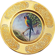 "Beautiful Hutschenruther Selb Bavaria 1900's Hand Painted ""Macaw Tropical Parrot"" 10"" Scenic Plate"