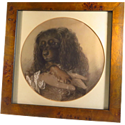 King Charles Spaniel Chalk Drawing by John Barker Dated 1849