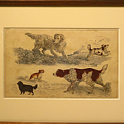 19th Century Engraving Spaniel Hunting Sporting Dogs