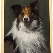 Collie Dog Pastel Portrait Signed