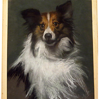 Collie Dog Pastel Portrait Signed