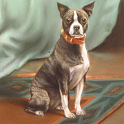 Antique Boston Terrier Dog Portrait Painting
