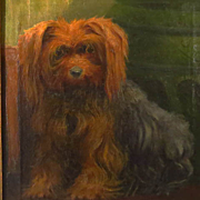Antique Yorkshire Terrier Dog Oil Portrait