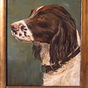 Springer Spaniel Dog Portrait