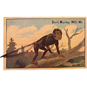 Monkey  Postcard Spring Tail Schmidt