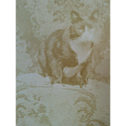 Late 1800s cute black white cat posed on floral tapestry rug cabinet card photograph