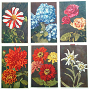 Thor E Gyger postcard vibrant floral postcards lot of six vintage Dahlia Rose Zinnia