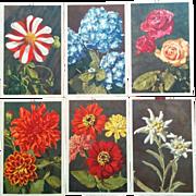 Thor E Gyger postcard vibrant floral postcards lot of six vintage Dahlia Rose Zinnia