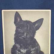 Vintage Scotch Terrier Postcard...Alfred Mainzer...Belgium