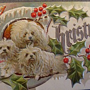 Early 1900's Embossed Christmas Postcard Unused(3 White Dogs) No. 1 in Dog Series