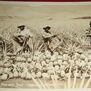 Black Americana Unused Early Postcard Pineapples at Harvest Time Hawaiian Islands