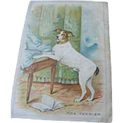 1907 Postcard Print of Posed Fox Terrier Dog