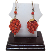 Victorian Coral Cluster Earrings - 14K Gold - Italy