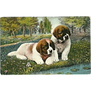 Vintage Postcard of Two Saint Bernard Puppies
