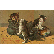 Embossed Vintage Postcard of Three Cats in Shoes - 1909 - Red Tag Sale Item