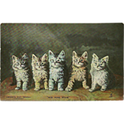 Raphael Tuck Photochrome Postcard of Five Landor Cats or Kittens