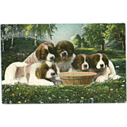Vintage Postcard of Five Saint Bernard Puppies