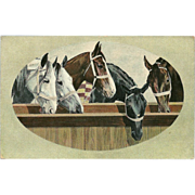 Vintage Postcard of Five Horses by Theodor Eismann