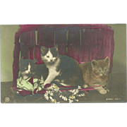Vintage German Rotophot Tinted Photo Postcard of Three Cats - Red Tag Sale Item