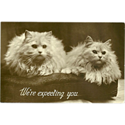 Vintage Glossy Photo Postcard of Two Persian Cats - Red Tag Sale Item