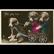 Vintage Tinted Photo Postcard of Three Dressed Puppies