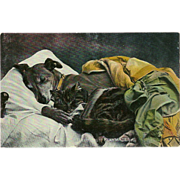 Raphael Tuck Photochrome Postcard of Dog and Cat Sleeping Together in Bed