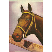 Vintage Postcard of Brown Horse Facing Left - 1 of 2