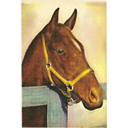 Vintage Postcard of Brown Horse Facing Right - 2 of 2