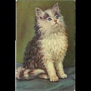 Vintage Artist Signed Postcard of Seated Kitten