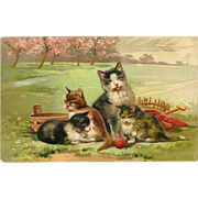 Embossed 1908 PFB Postcard of Cat and Three Kittens