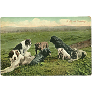 Early 1900's Real Photo Postcard of Group of Different Breeds of Dogs