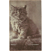 Photo Postcard 1900 of Kitten by C.E. Bullard