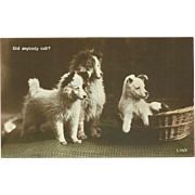 Real Photo Postcard of Three Puppies