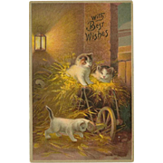 Embossed Vintage Best Wishes Postcard with Three Kittens - Red Tag Sale Item
