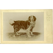 Pair of Late 1800's Cabinet Photos of Large Dog