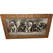 Vintage 1904 Photo Print of Five Bulldogs - Committee of Safety